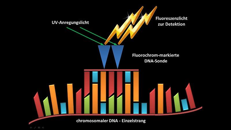 Fluoreszenz in-situ Hybridisierung (FISH) | Molekularpathologie Trier